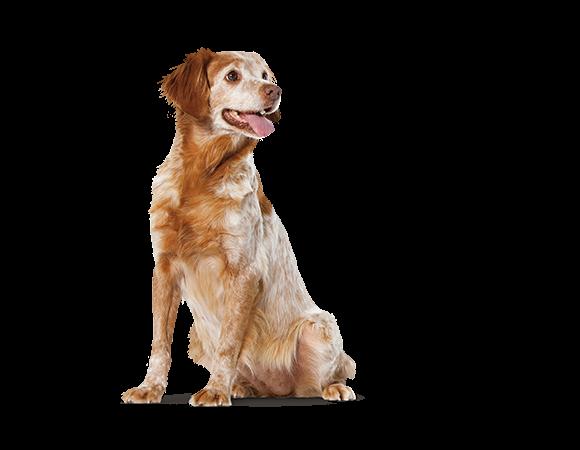 Medium Dog Senior Consult Mature - vanaf 7 jaar