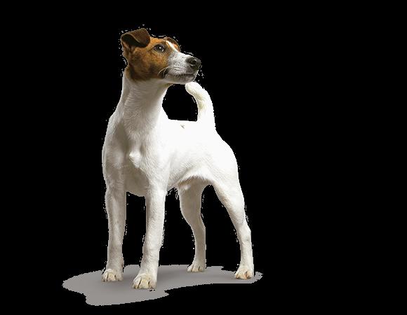 Small Dog Adult - vanaf 10 maanden t/m 8 jaar