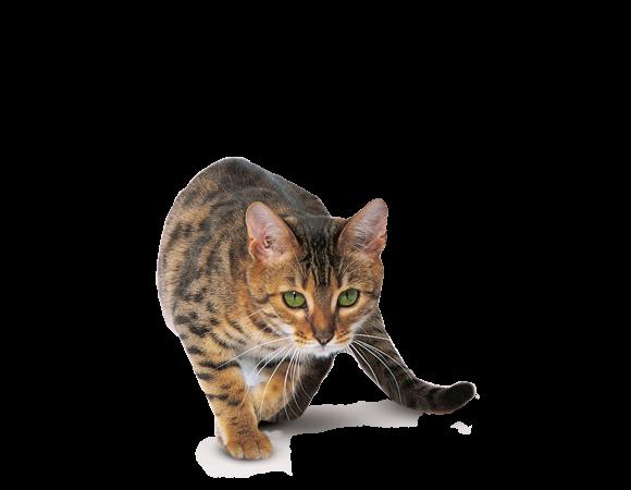 Pure Feline N.02 Slank