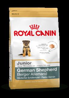 German Shepherd Junior