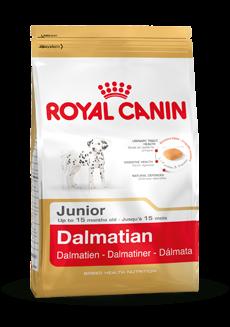 Dalmatian Junior