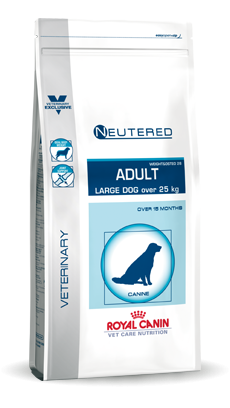 Large Dog Neutered Adult