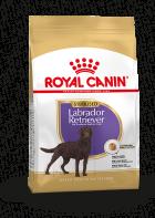 Labrador Retriever Sterilised Adult