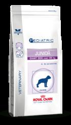 Giant Dog Junior