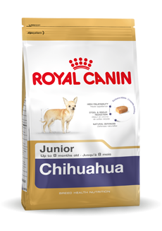 Chihuahua Junior