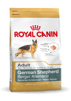 German Shepherd Adult