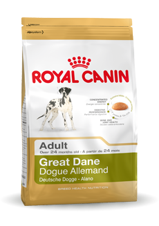 Great Dane Adult
