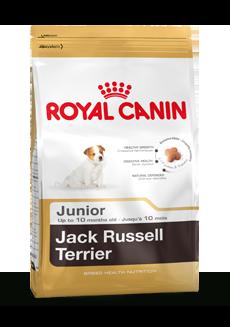 Jack Russell Terrier Junior