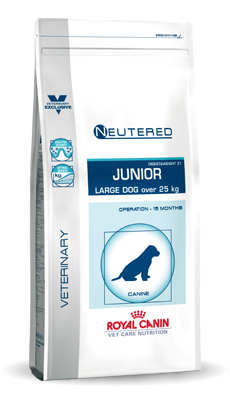 Large Dog Neutered Junior