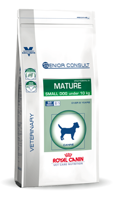 Small Dog Senior Consult Mature