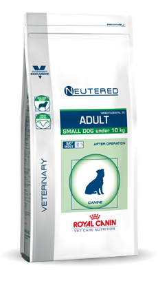 Small Dog Neutered Adult
