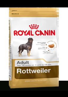 Rottweiler Adult