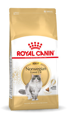 Norwegian Forest Cat Adult