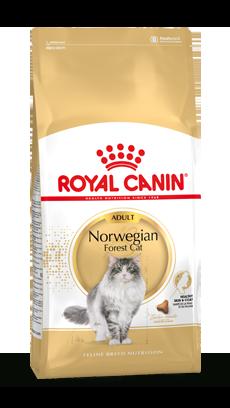 Norwegian Forest Cat Adult