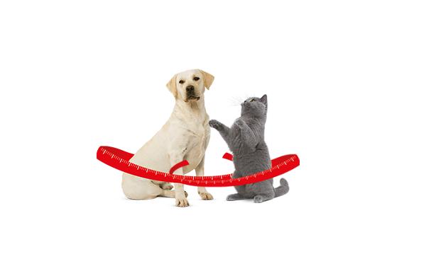 Overgewicht bij honden en katten