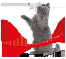 Heeft jouw kat een gezond gewicht
