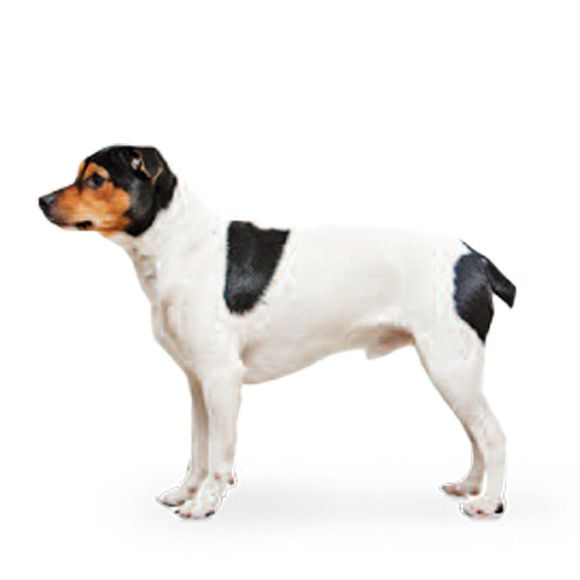 Deense Boerderijhond