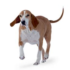 Hygenhund