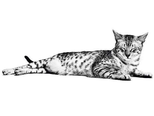 Ouder wordende kat
