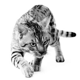 Tips voor de oudere kat met gewrichtsproblemen