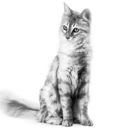 Waarom moet mijn kat op Seniorenconsult?