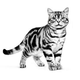 Waarom bestaat er speciale voeding voor de oudere kat?