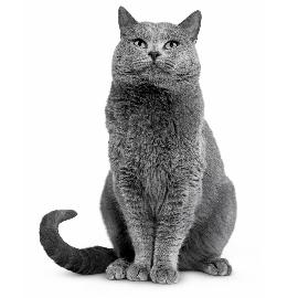 Tips voor het baasje met een oudere kat