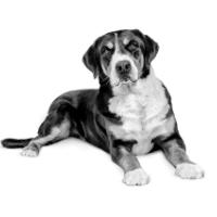 Tips voor gewrichtsproblemen bij de oudere hond