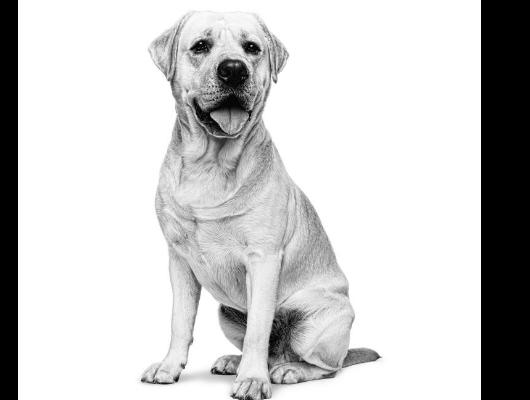 Urinewegproblemen hond