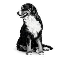 Tips baasje oudere hond