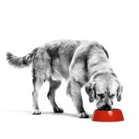 Wat zijn urinewegproblemen en hoe ontstaan ze bij de hond