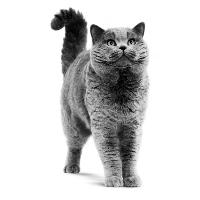 Heeft mijn kat urinewegproblemen?