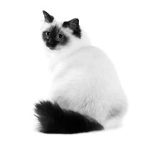 Blaasproblemen bij de kat