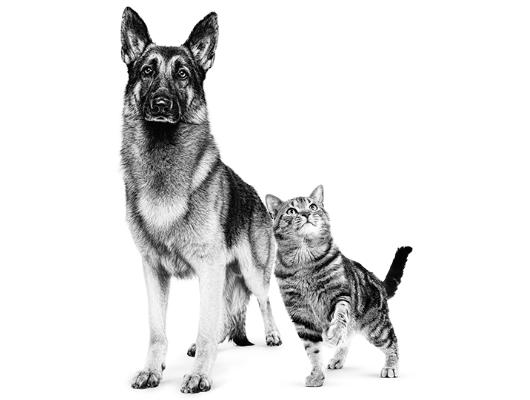 Urinewegproblemen kat en hond