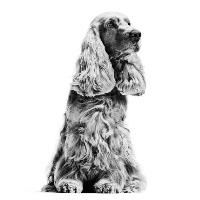 Hoe oud is mijn hond in mensenjaren