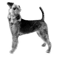 Seniorenconsult Hond