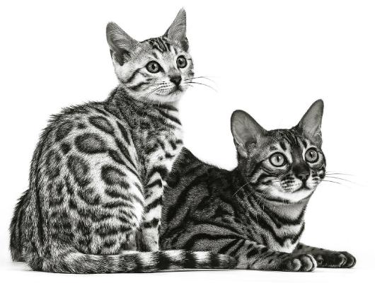 Urinewegproblemen kat