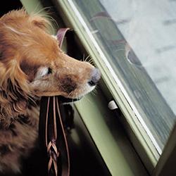 Maak je huis puppyveilig