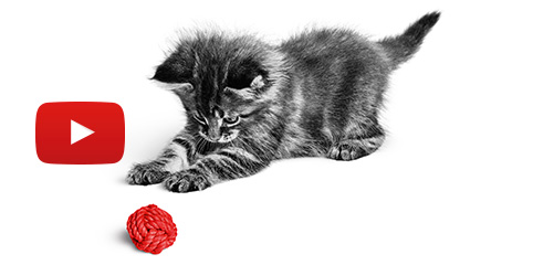 Je kitten is geen kat  - Vraag Royal Canin om advies