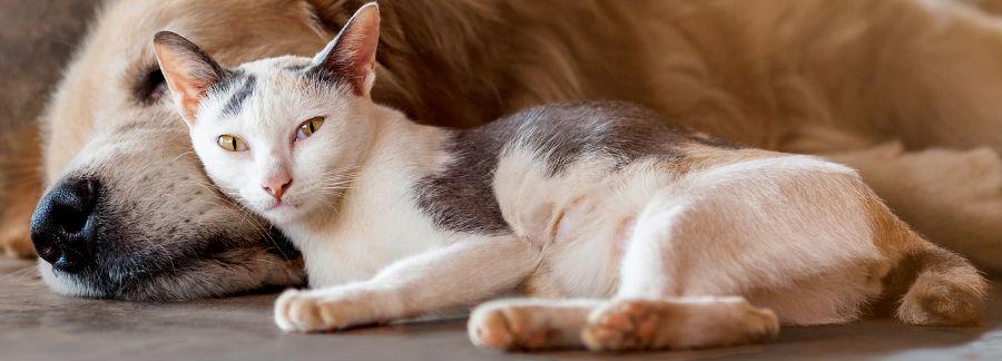 Bekend Kitten introduceren bij andere huisdieren   Royal Canin GL12