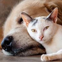 Kitten of volwassen kat