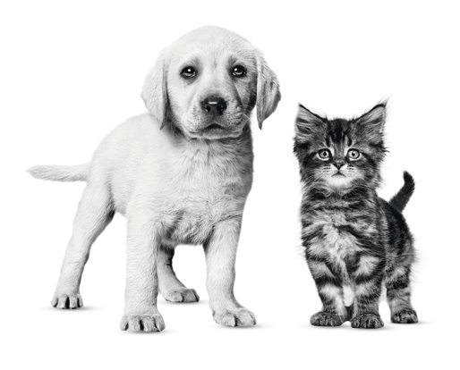 Gratis puppy- kittenpakket
