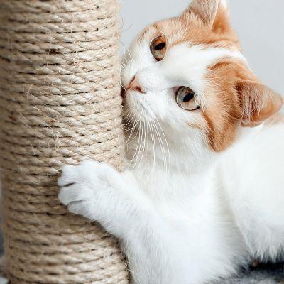 Checklist: Alles in huis voor je nieuwe kitten?