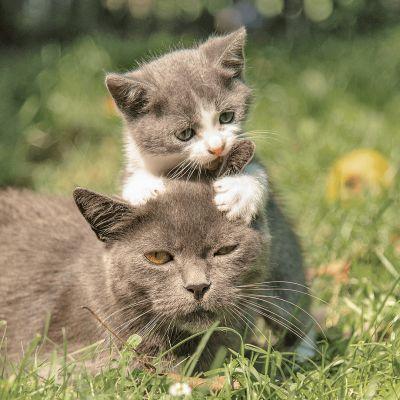 Hoe groeit mijn kitten?