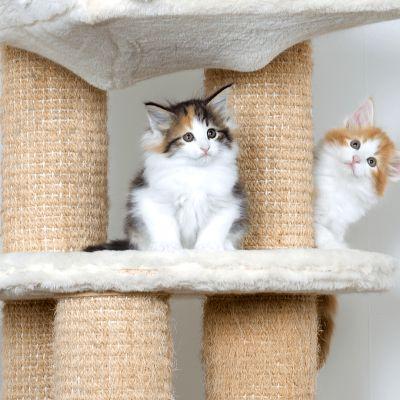 Hoe maak ik mijn huis kittenproof?