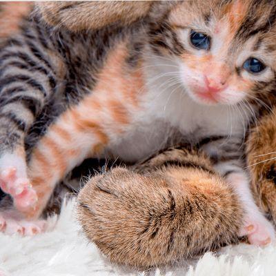 Hoe leert mijn kitten?
