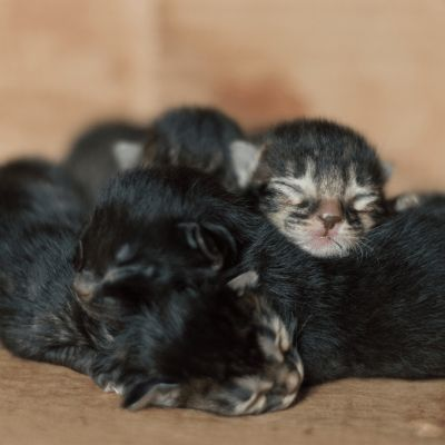 Mijlpalen in de ontwikkeling van je kitten