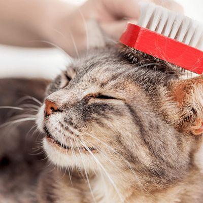 De lichaamsverzorging van je kitten