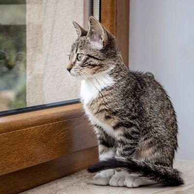 Wordt je kat een binnen- of buitenkat?