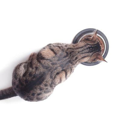 Droogvoer en natvoer voor katten - 10 feiten